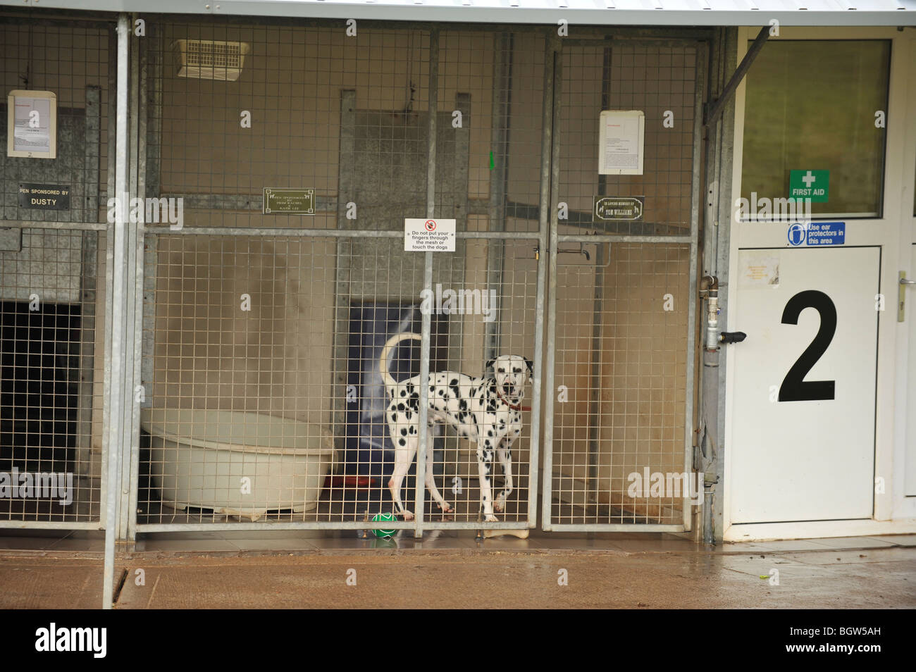 dalmation in a rescue centre - Stock Image