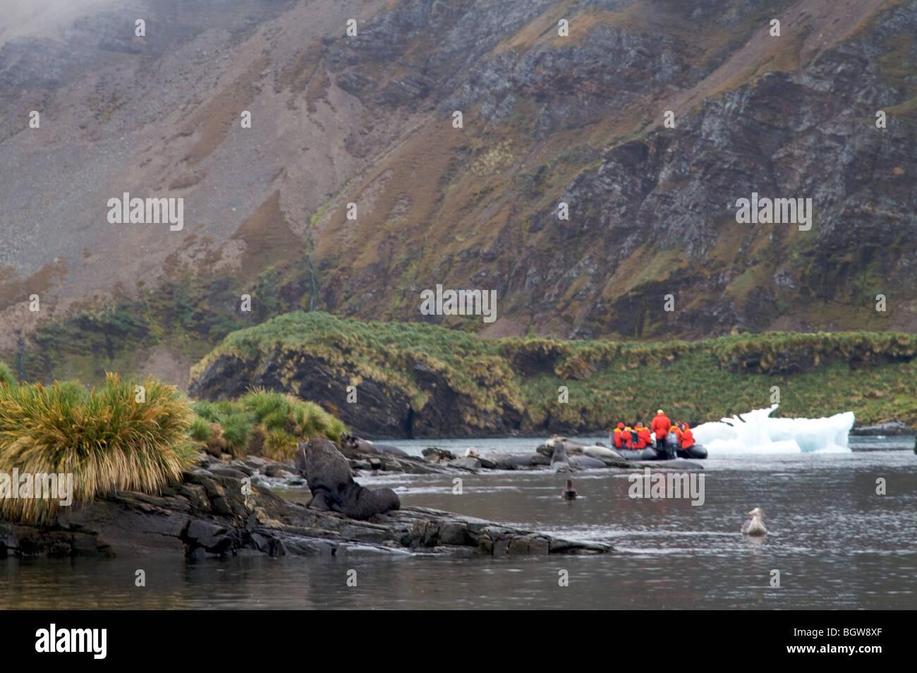 Tourists exploring South Georgia Island by zodiac - Stock Image