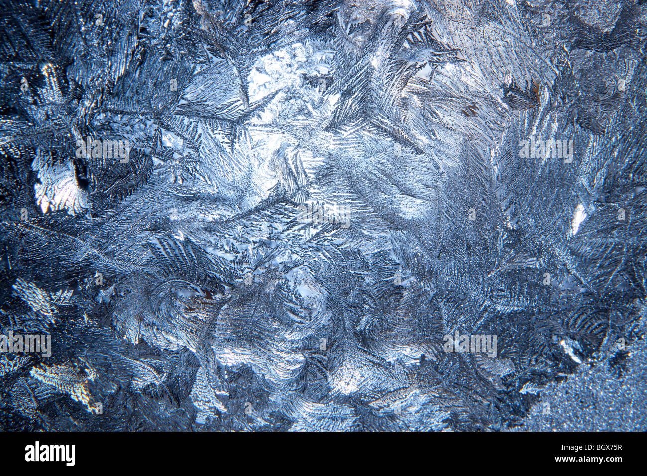 hoar frost - Stock Image