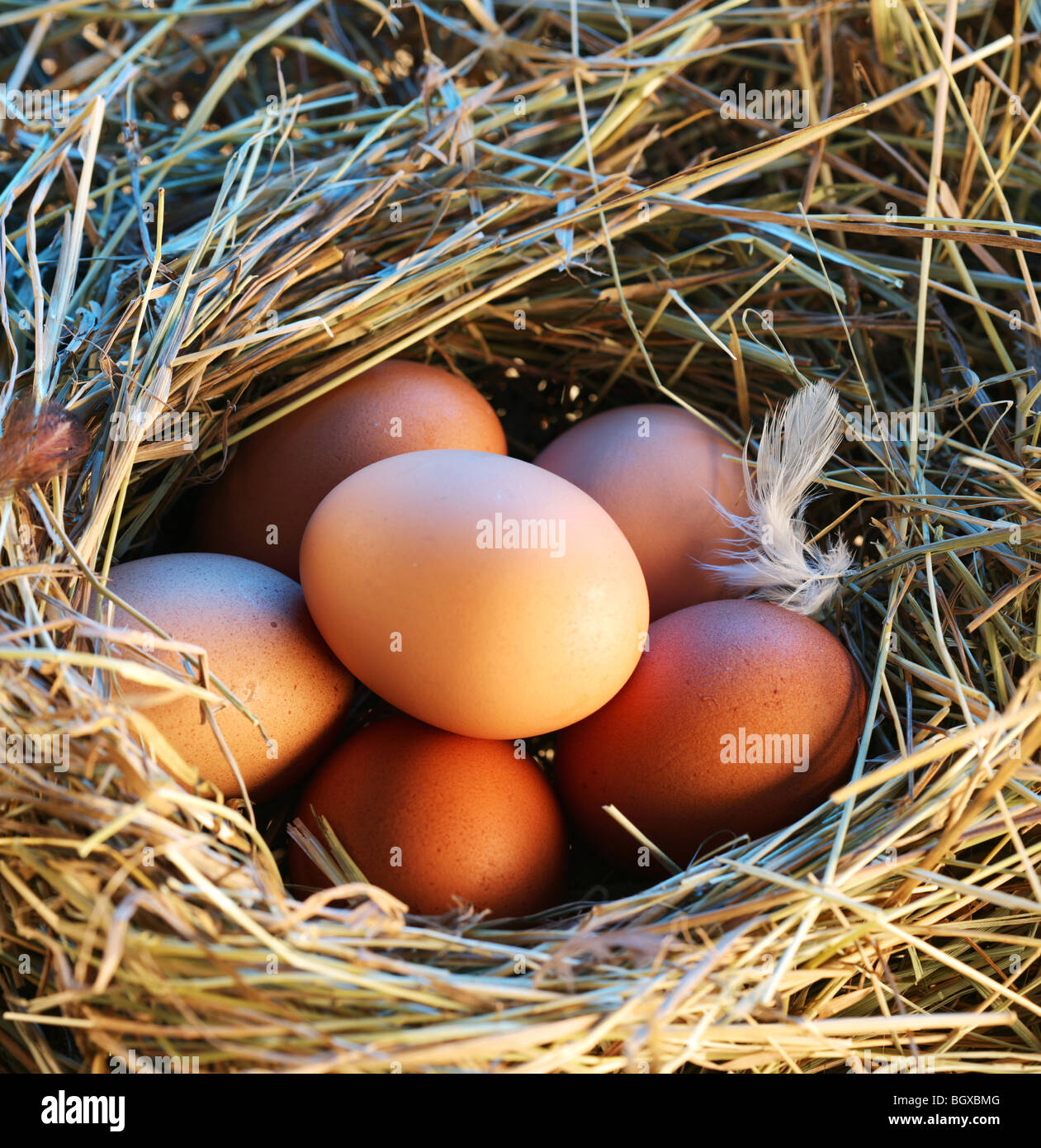 Chicken eggs in the straw in the morning light. - Stock Image