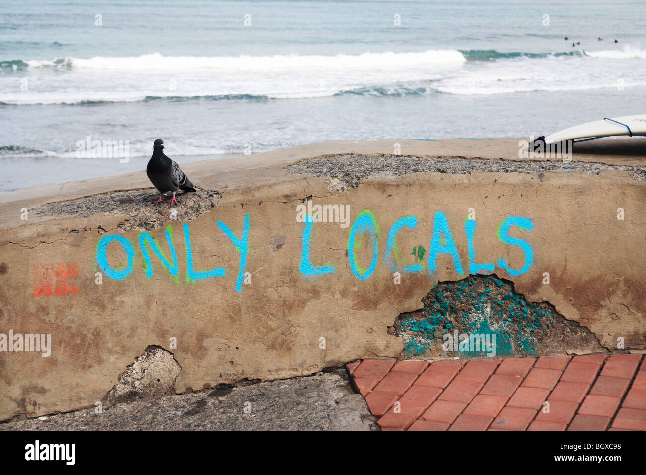 'Only Locals' painted on wall at surf break with pigeon sitting on wall - Stock Image
