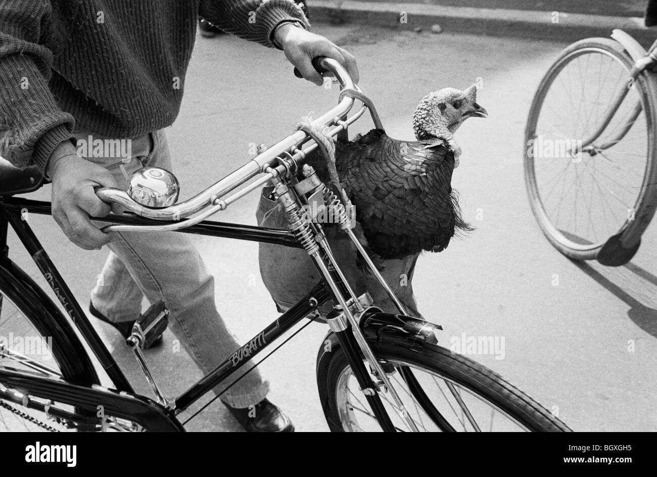Turkey being transported from market on bike, TIRANA, ALBANIA, MAY' 92 - Stock Image