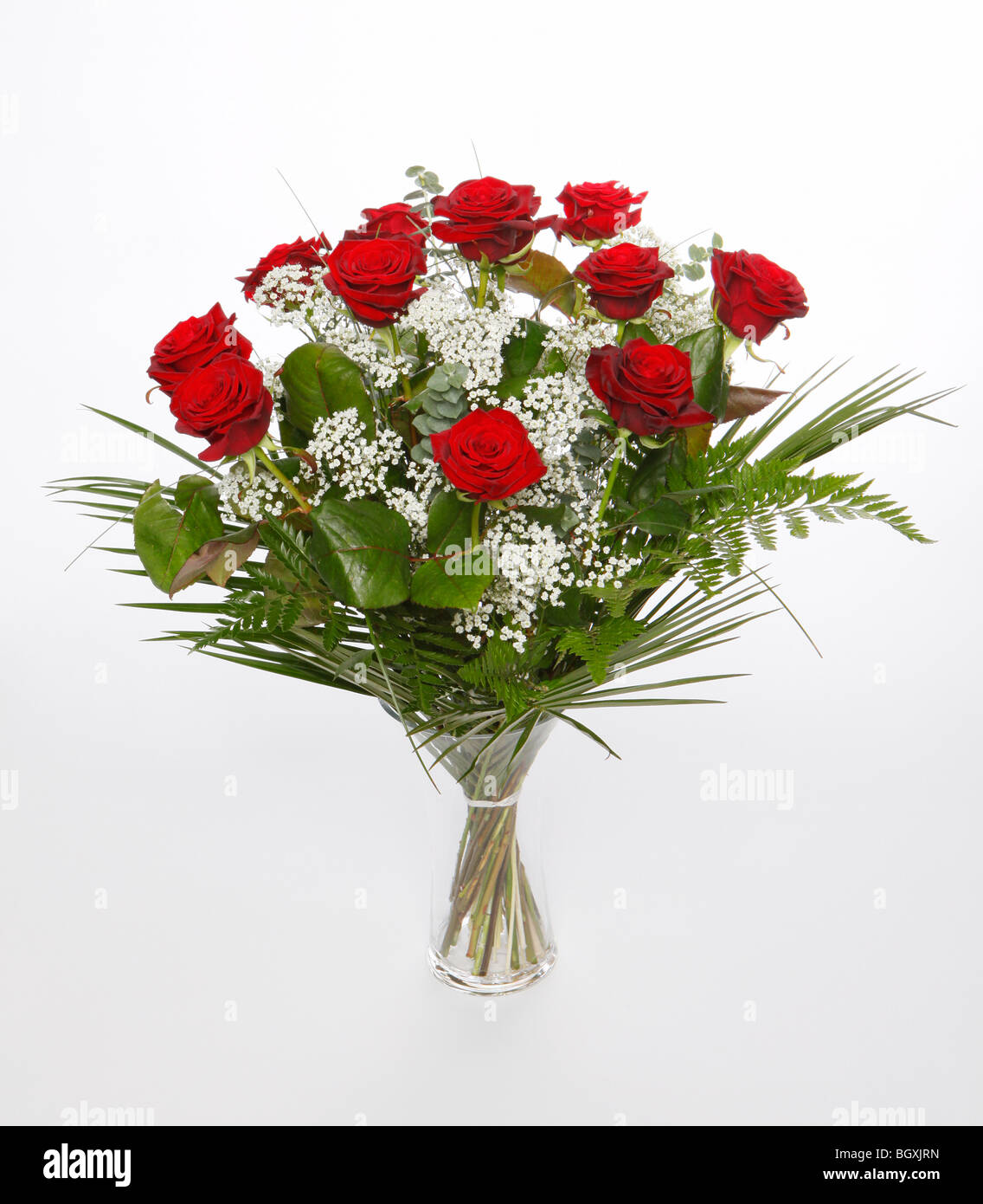 A dozen red roses for Valentines Day. Flowers on a white background - Stock Image