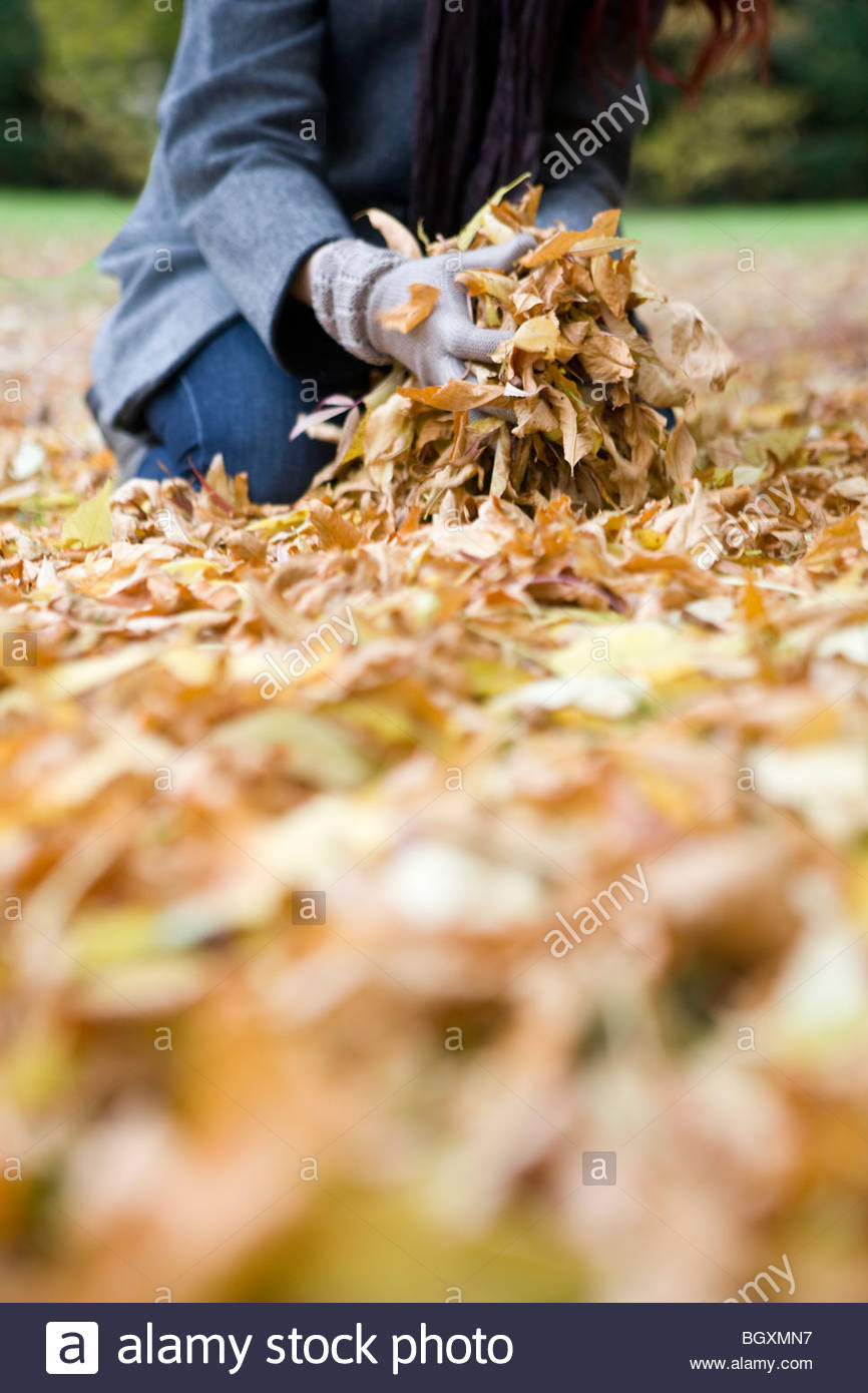 A young woman gathering autumn leaves - Stock Image