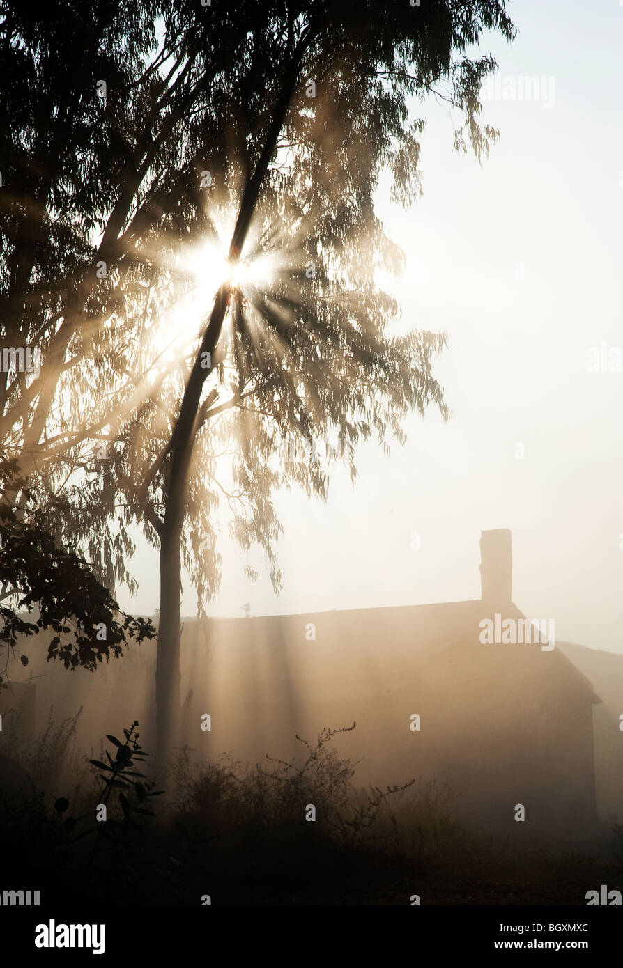 Sunburst through trees above a barn in India. Silhouette - Stock Image