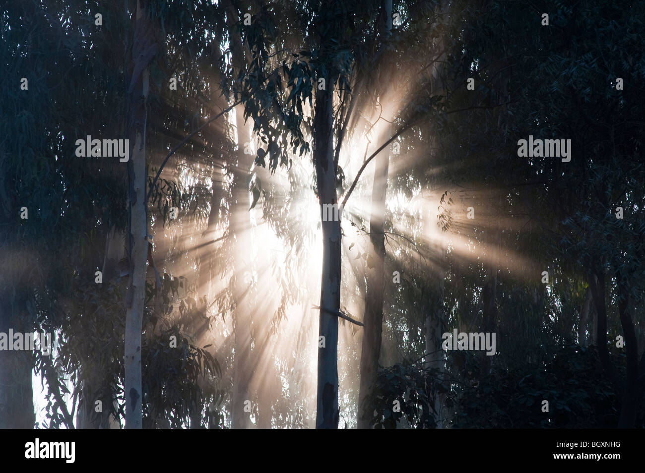 Sunburst through trees in India, Silhouette - Stock Image