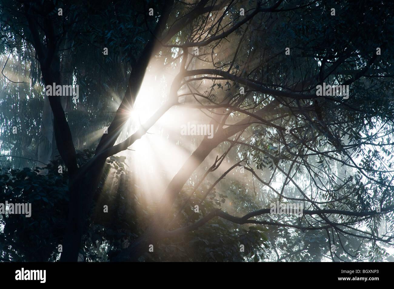 Sunburst through trees in India, Silhouette - Stock Image
