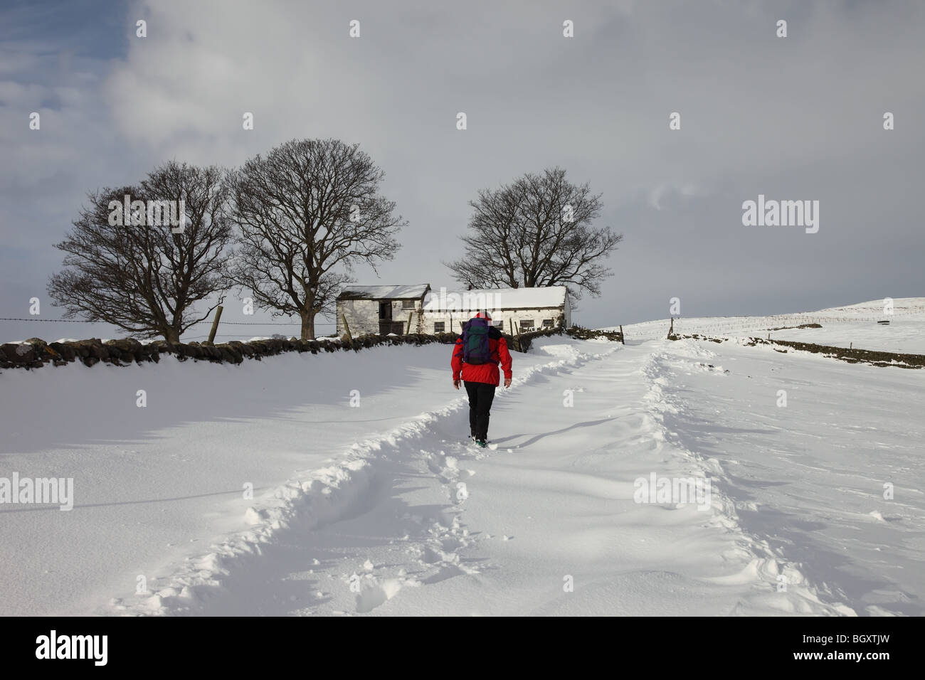 Walker on the Track Between Bowlees and Ash Hill in Winter Snow Teesdale County Durham - Stock Image