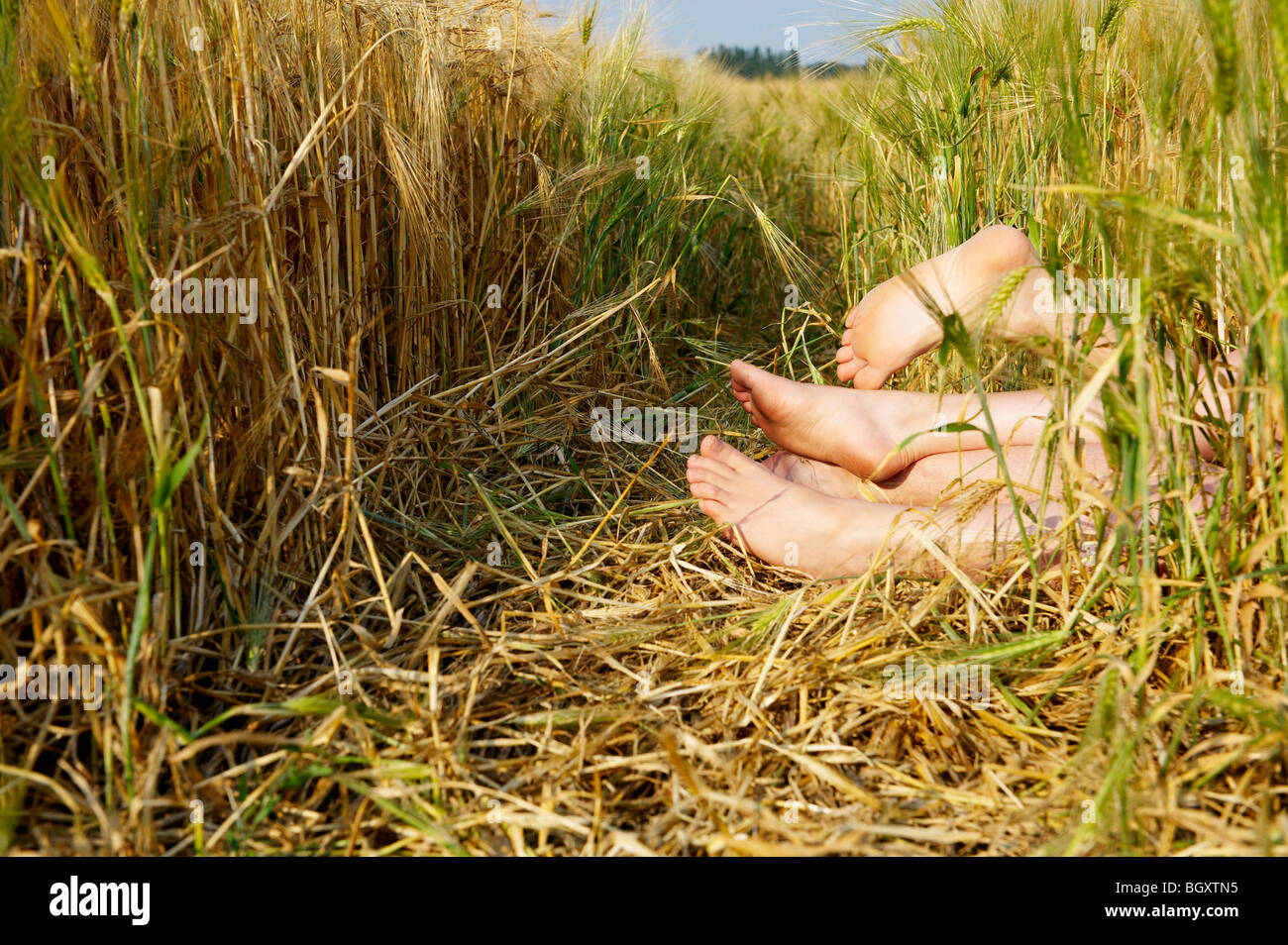 Feet sticking out from a wheat field - Stock Image