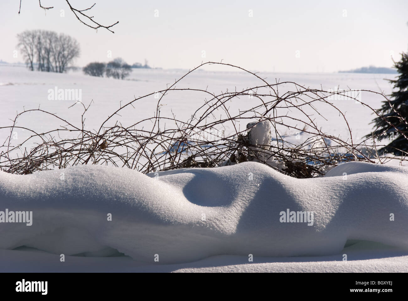 frost-encrusted pillowy snowdrifts sparkle in front of an idyllic vine-covered fence against the prairie horizon - Stock Image