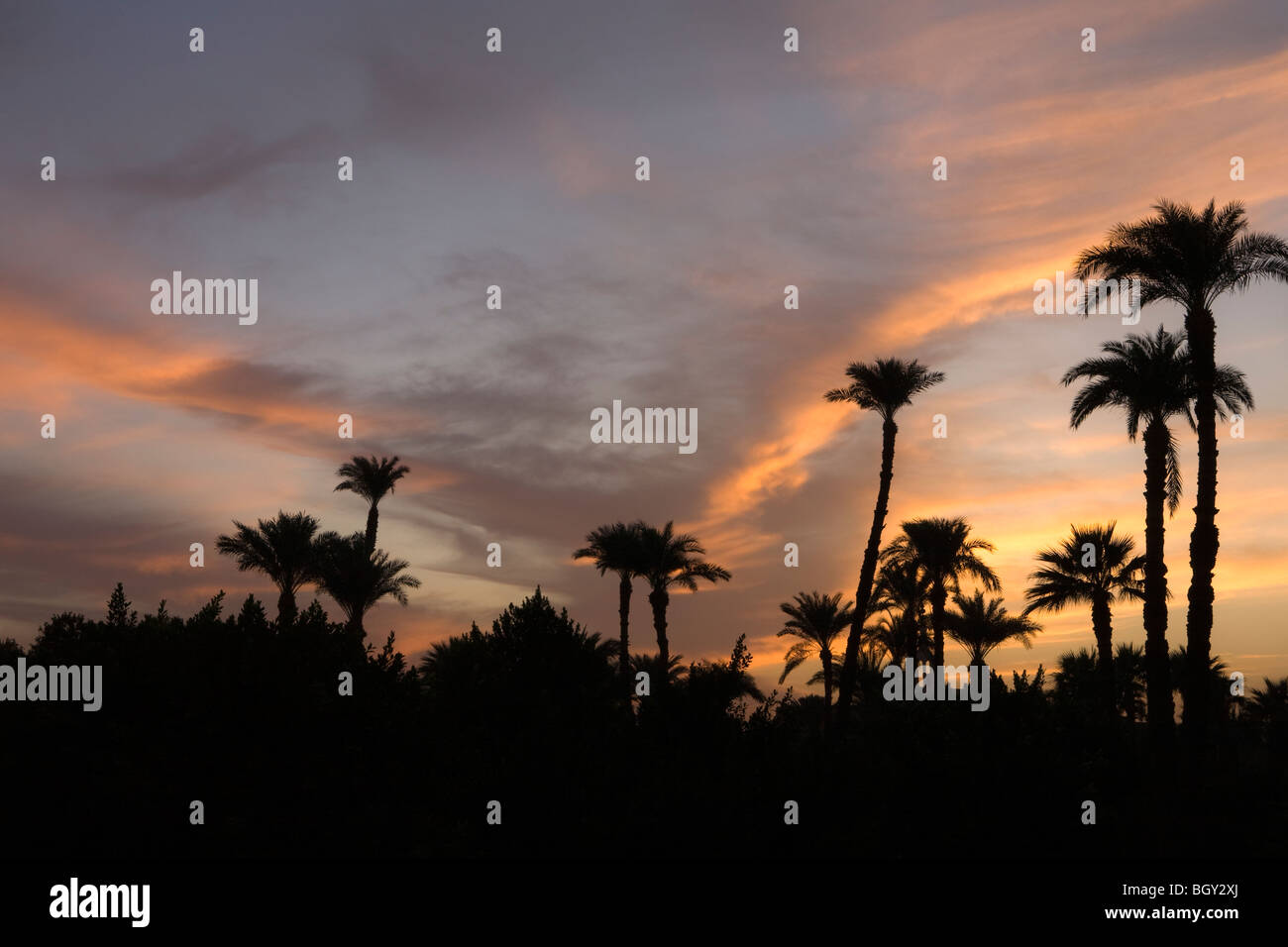 Sunset colours seen through Palm trees in Luxor, Egypt - Stock Image