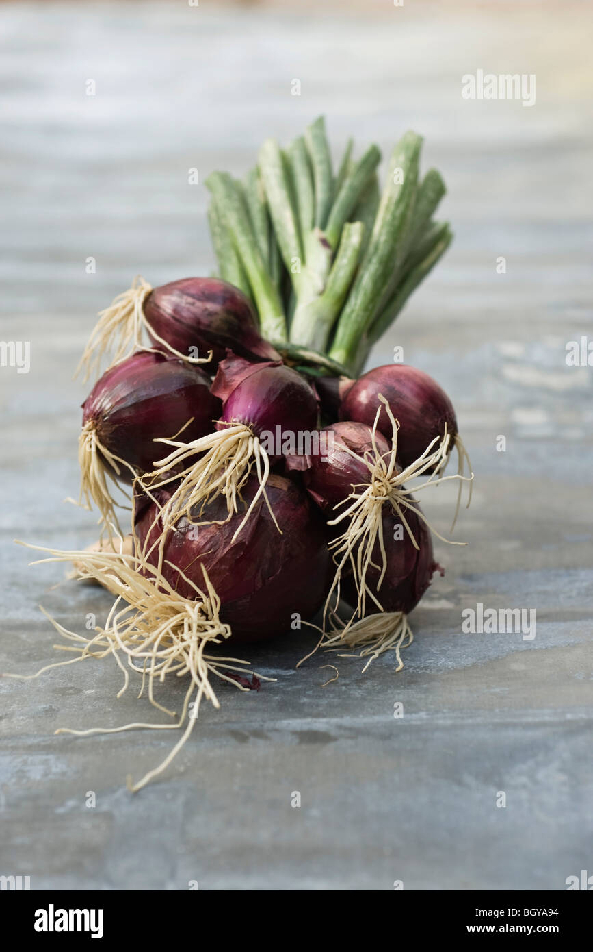 Bunch of fresh red onions - Stock Image