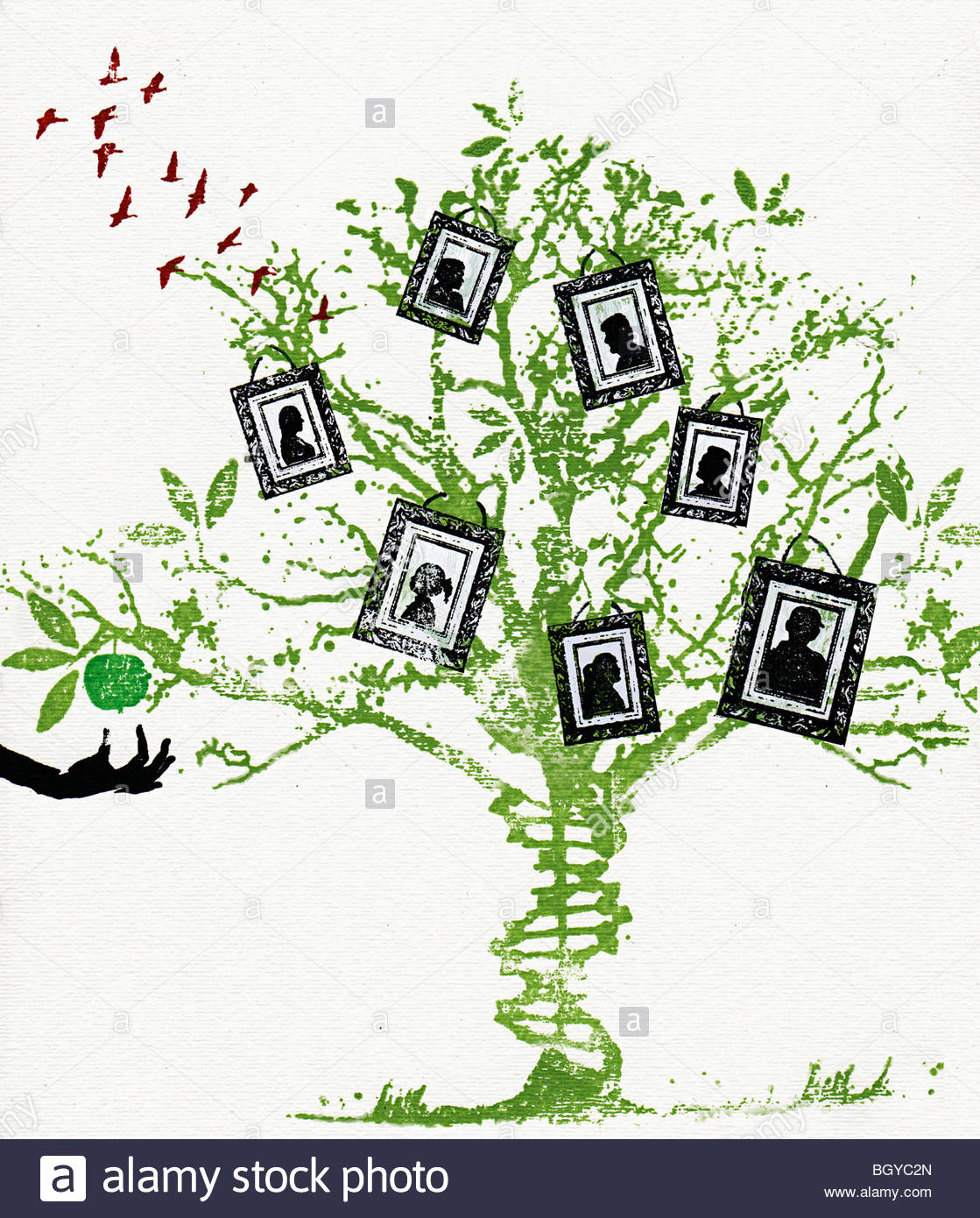 Pictures on family tree - Stock Image