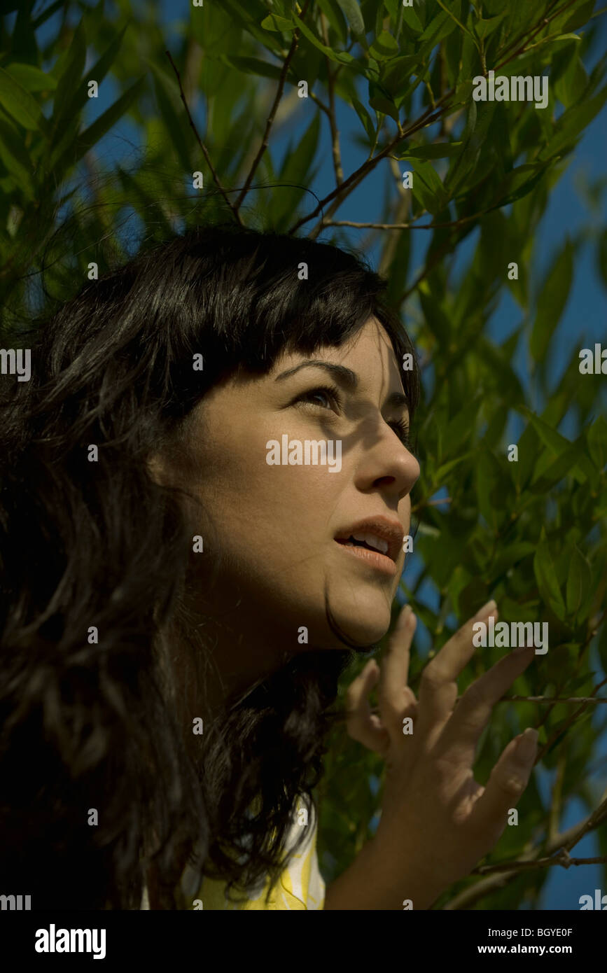 Young woman looking through foliage, portrait - Stock Image