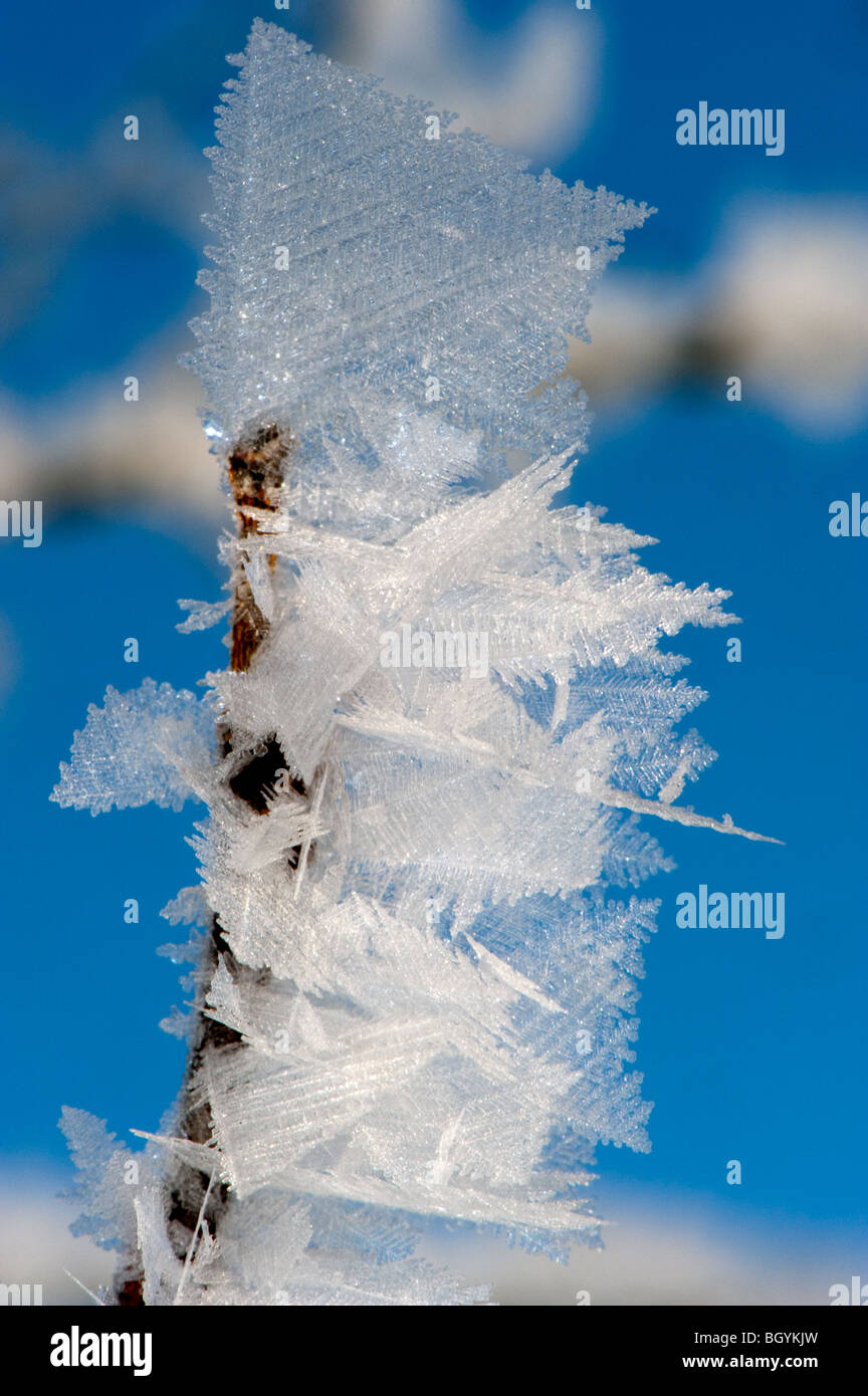 Close up of ice crystals forming on tree branches in winter - Stock Image