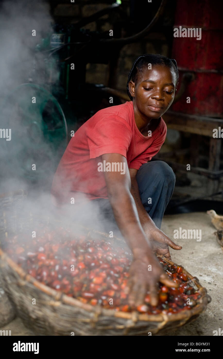 Farmer operating steaming palm oil - Stock Image