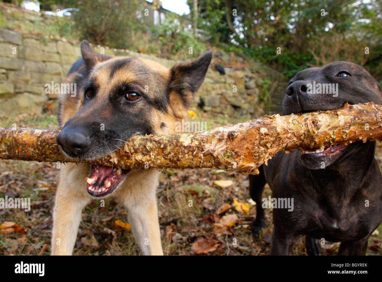 Bruno & Kayleigh - Stock Image