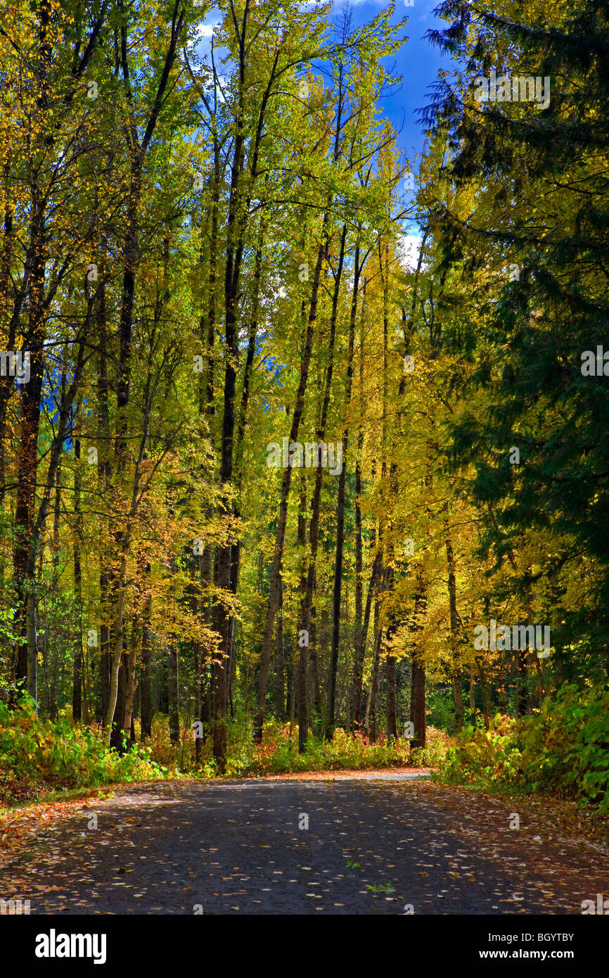 Road surrounded by fall colors in Mount Fernie Provincial Park, East Kootenay, British Columbia, Canada. - Stock Image