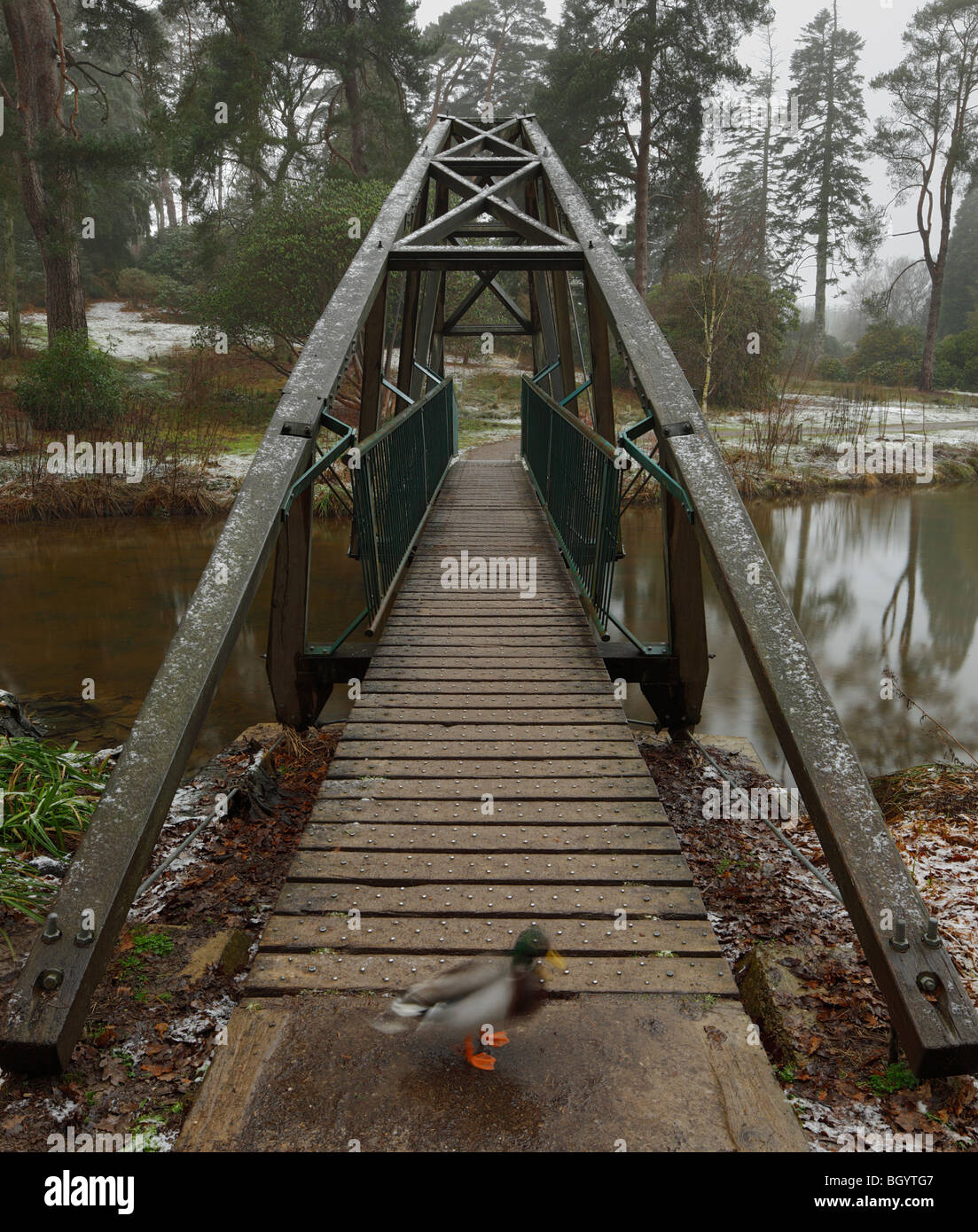 Bridge at Bedgebury National Pinetum. - Stock Image