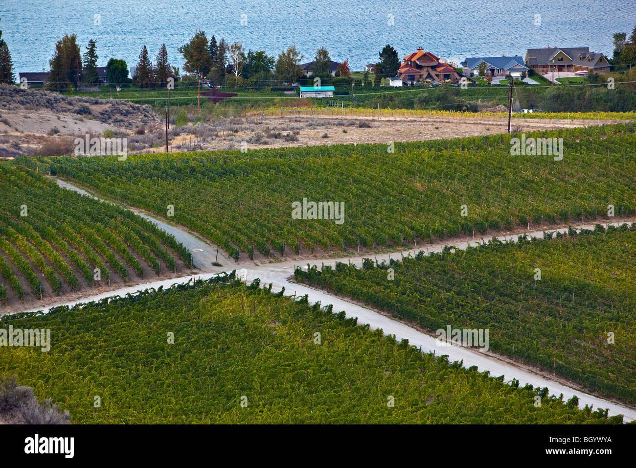 Crossroad amongst vineyards near the city of Osoyoos, Okanagan-Similkameen Region, Okanagan, British Columbia, Canada. Stock Photo
