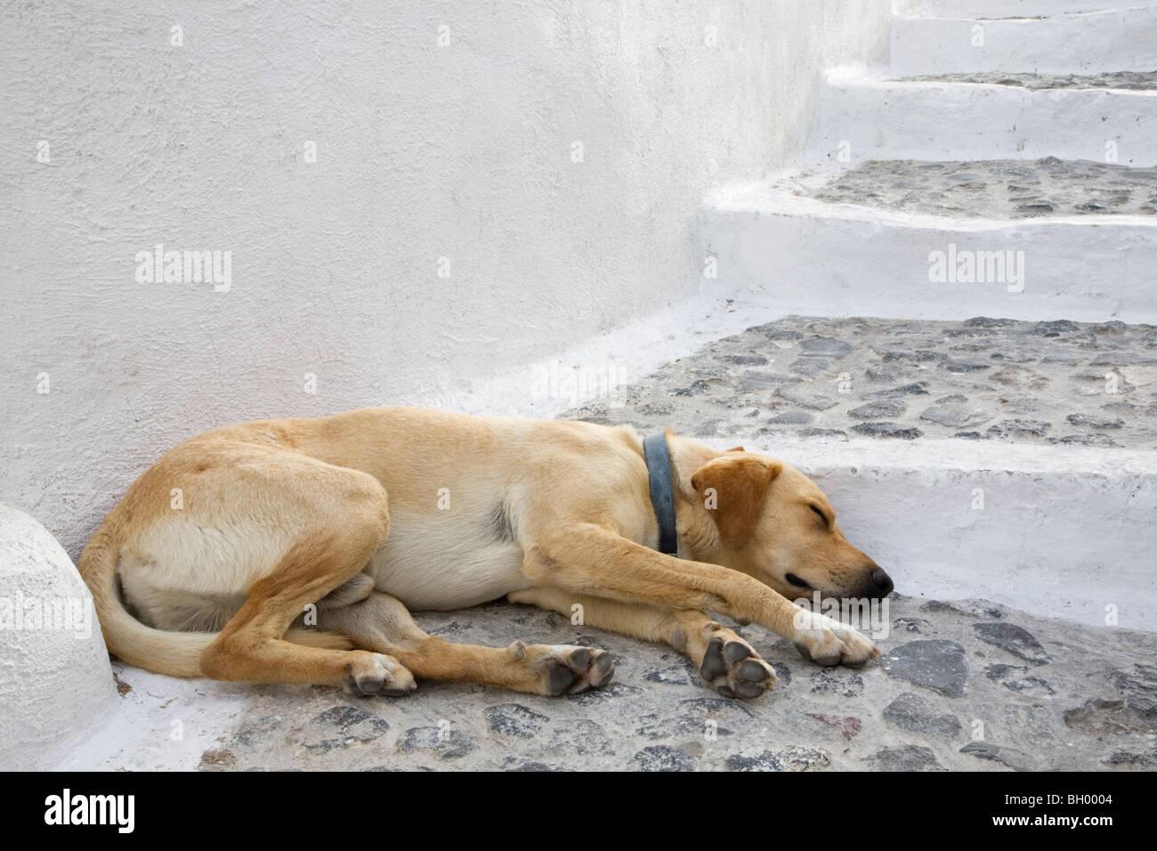 Dog sleeping on Santorini stone stairway - Stock Image