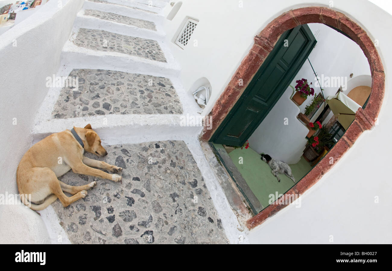 Dog sleeping outdoors on Santorini stairway and another asleep indoors - Stock Image