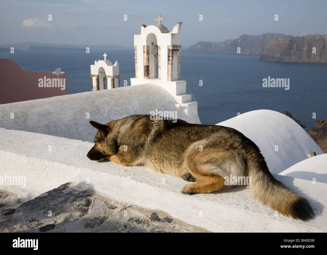 Sleeping dog on rooftop overlooking white church bell towers and Santorini lagoon - Stock Image