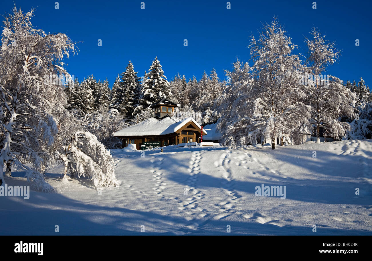 Snow covered trees and building Glenmore visitors lodge Scotland UK Europe Stock Photo