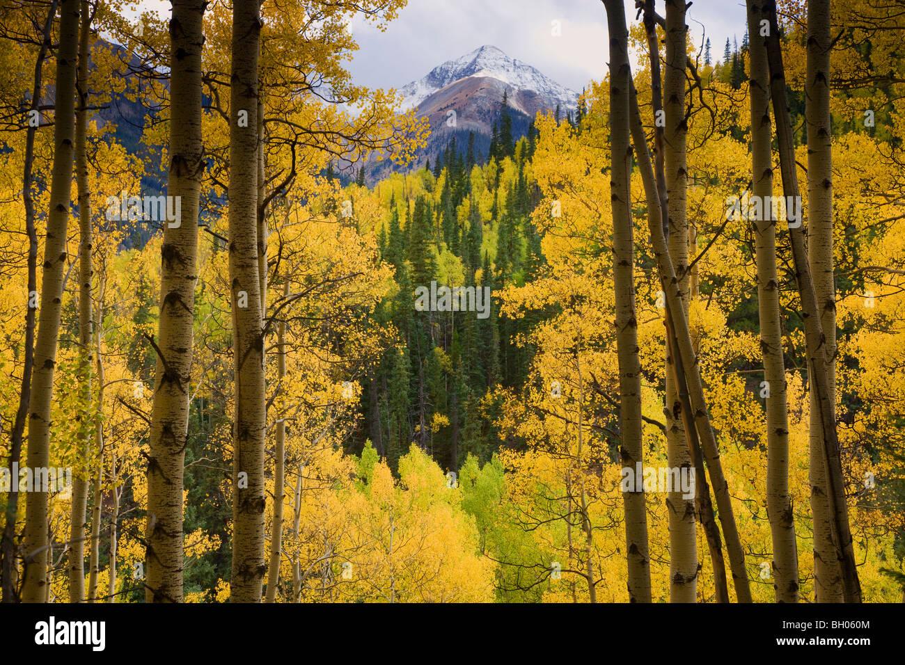 Fall colors along Henson Creek Road to Engineer Pass, San Juan Mountains, Colorado. - Stock Image