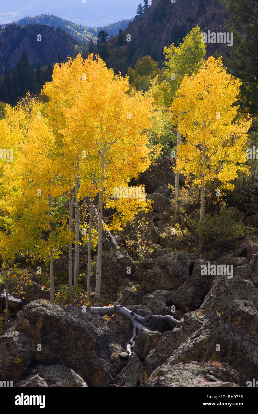 Fall colors along Highway 92, Gunnison National Forest, Colorado. Stock Photo
