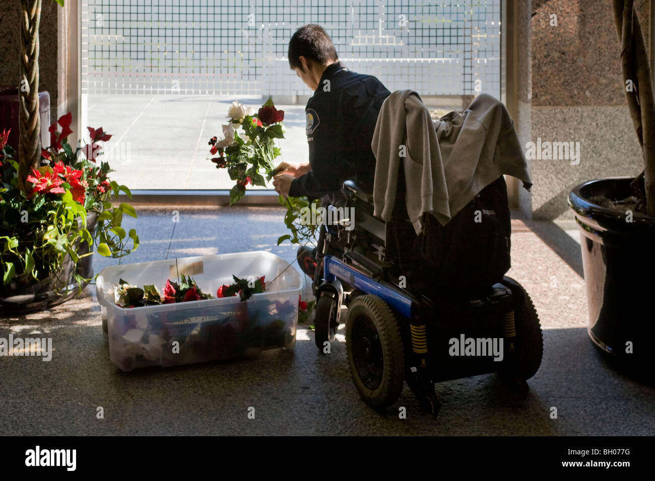 Confined to a wheelchair, a handicapped police cadet arranges Christmas flowers at a Southern California police - Stock Image
