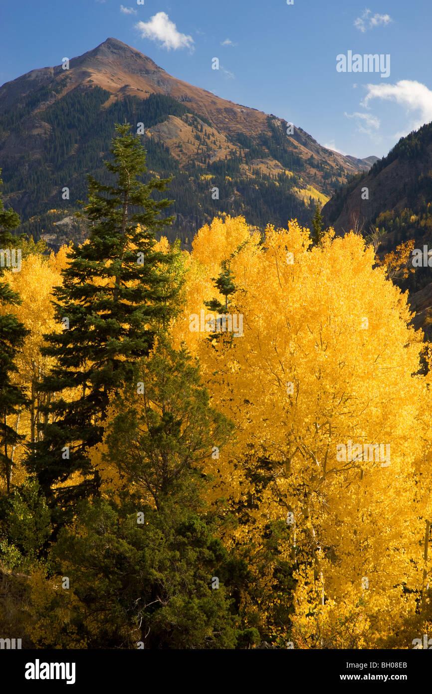 Autumn colors in the San Juan Mountains, near Ouray, Colorado. - Stock Image