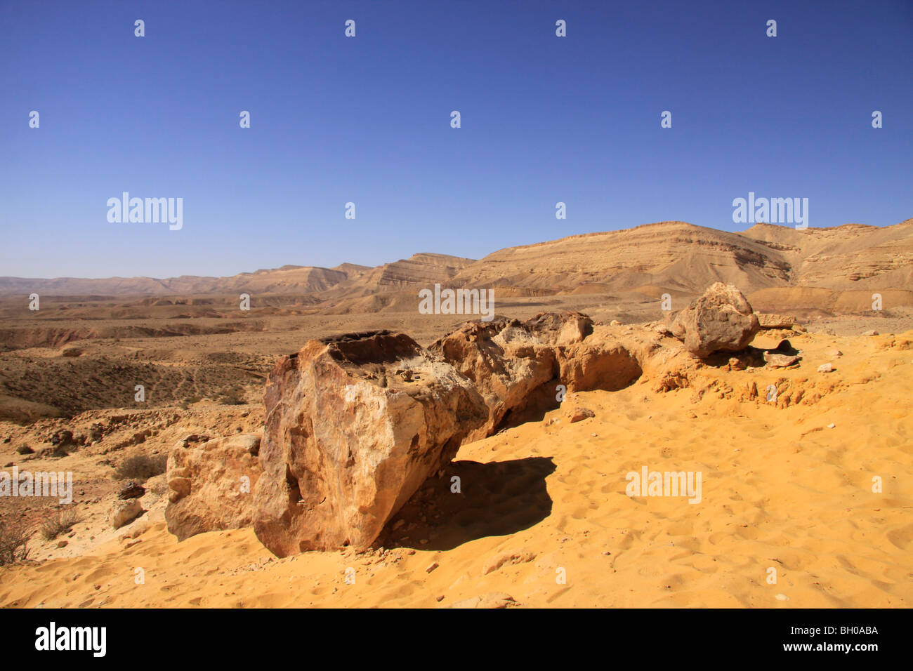 Israel, Negev, Petrified trees in the Large Crater - Stock Image