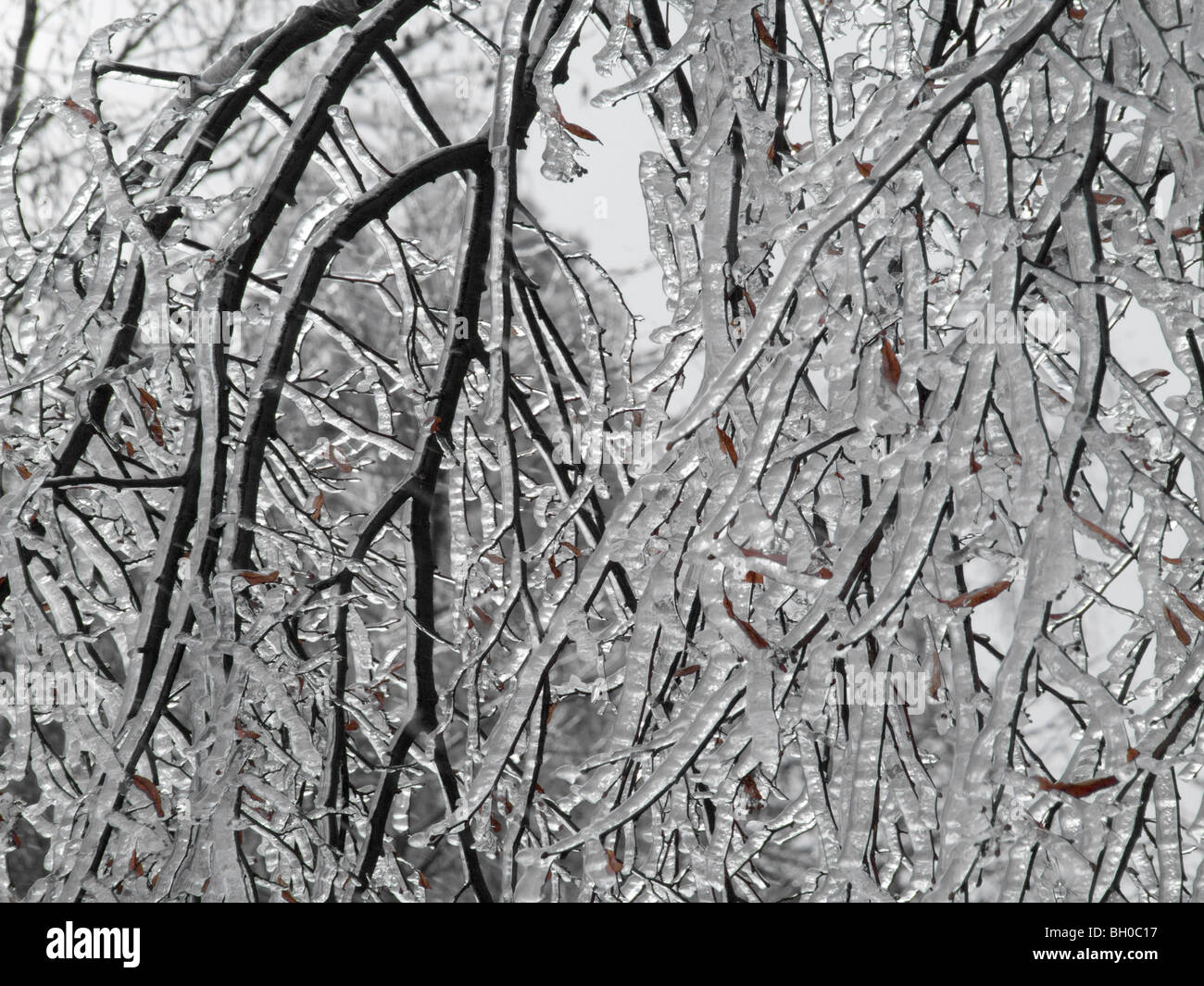 Extreme weather -winter - hoarfrost and glazed frost - Stock Image