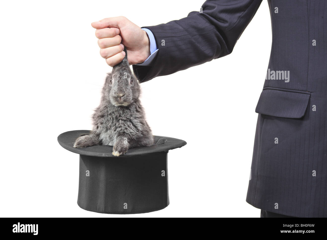 Magician holding a rabbit isolated on white background - Stock Image