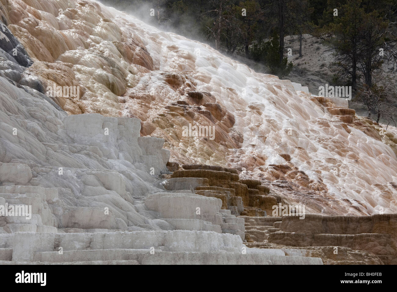 Terraced limestone at Mammoth Hot Springs, Yellowstone National Park, Wyoming. - Stock Image