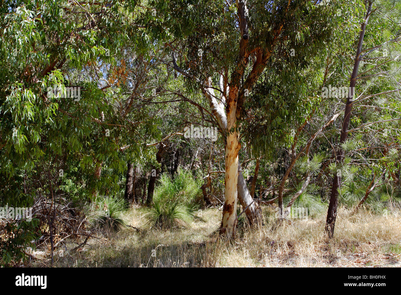 Vegetation in Western Australia. - Stock Image