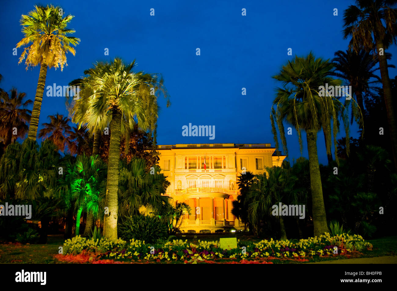palm trees lit up at night stock photos palm trees lit up at night