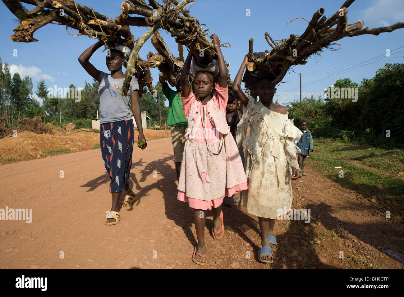 Children haul firewood out of the Kakamega Forest Reserve in Western Kenya. - Stock Image