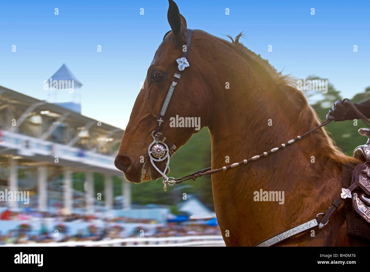 Western Horse Show High Resolution Stock Photography And Images Alamy