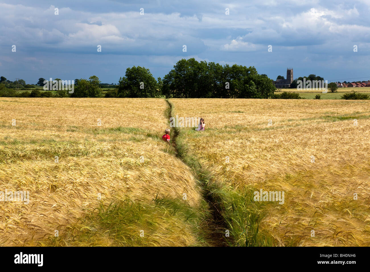 Two Children Playing in Wheat Field July, Lincolnshire,UK,England,GB - Stock Image