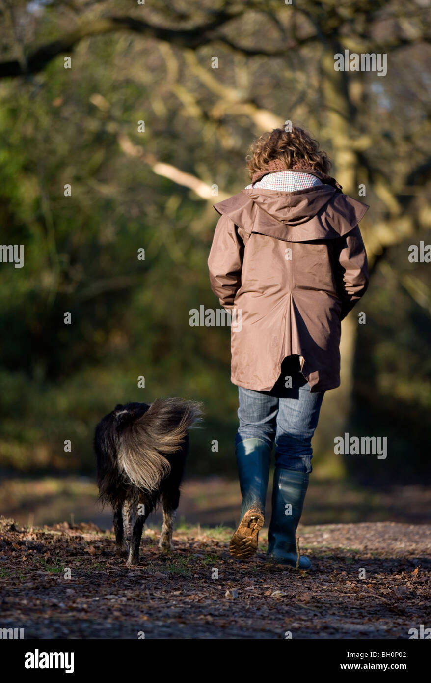 Owner and dog walking in woods Single adult women and adult border collie Gopsort - Stock Image