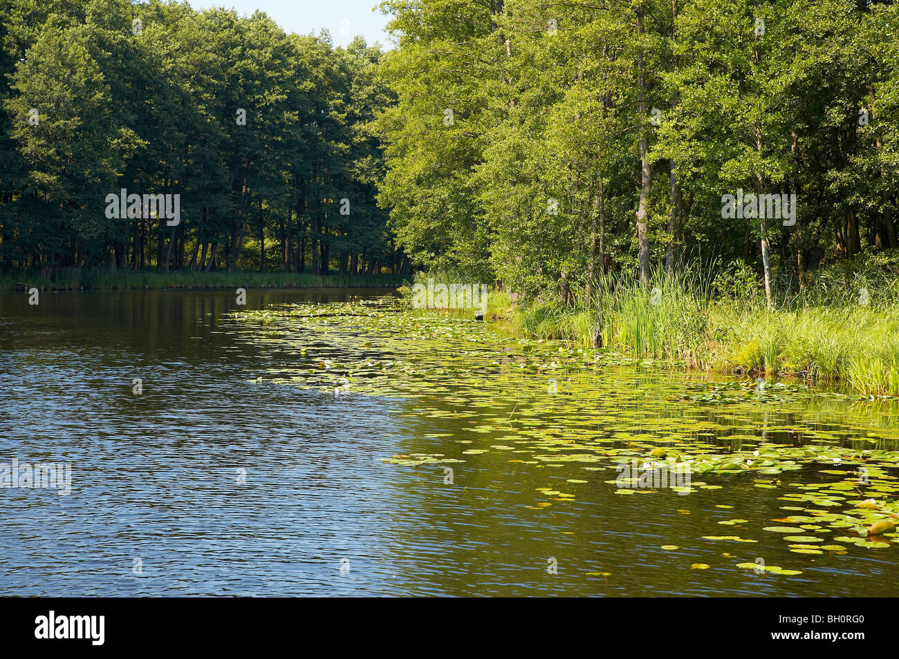 with the houseboat  on the 'Templiner Gewaesser', Roedelinsee, Brandenburg, Germany, Europe - Stock Image
