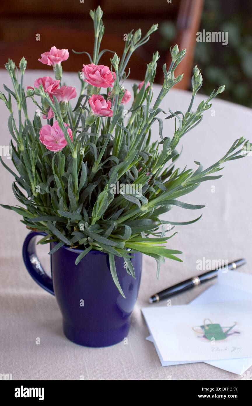 Gift Plant  Carnation in mug with Thank You Note - Stock Image