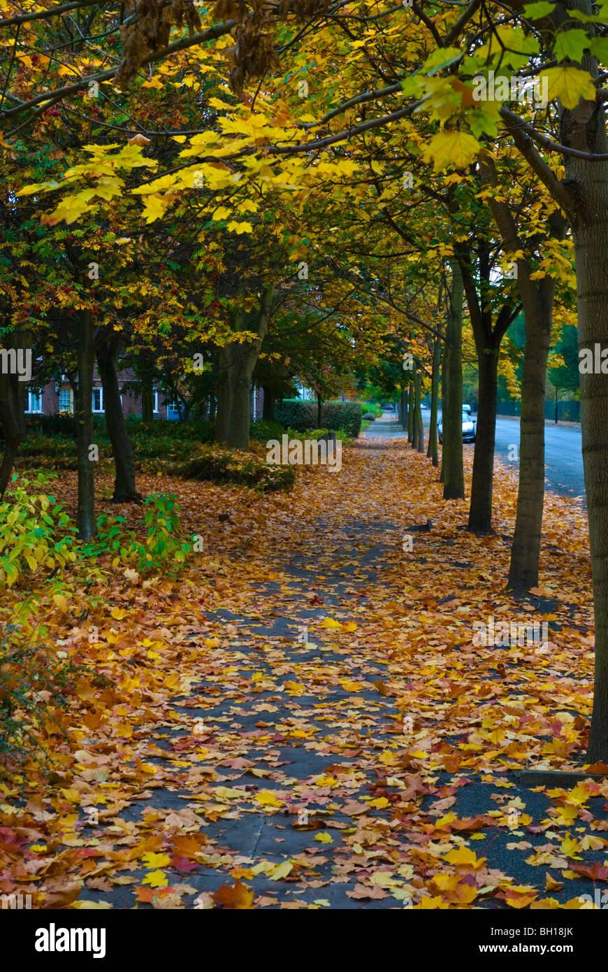 Autumn at Port Sunlight village Merseyside England UK Europe - Stock Image