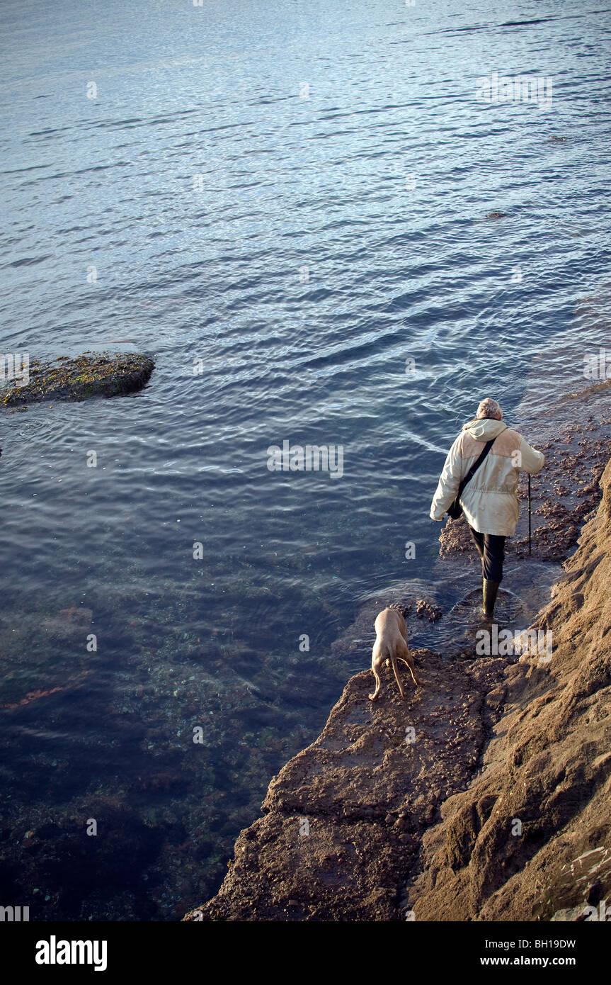 Dog Walking On The South West Coast Path Of Paignton Devon Unesco