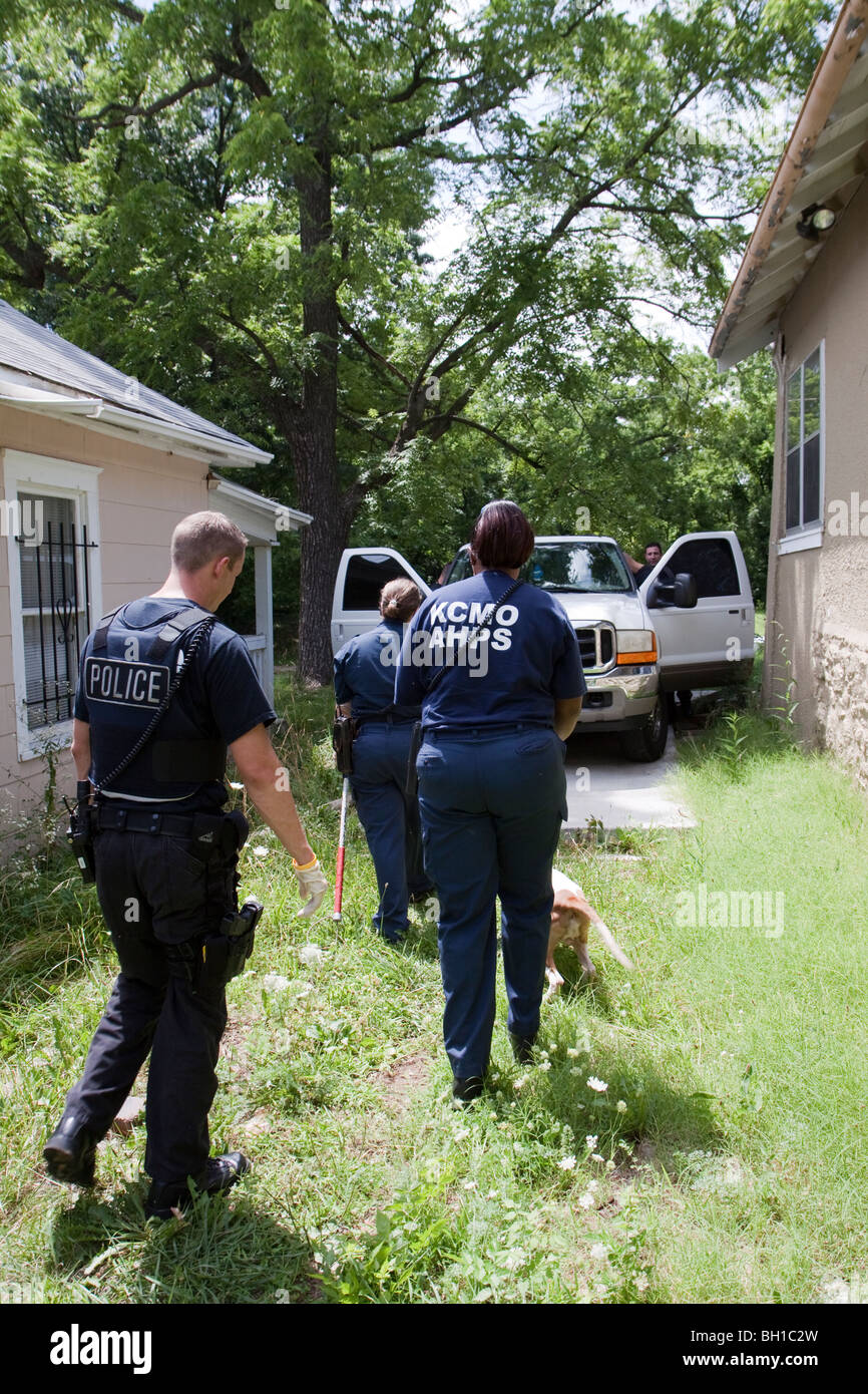 Police and animal control takes dog into custody for medical attention. The dog was chained up in the back yard. - Stock Image