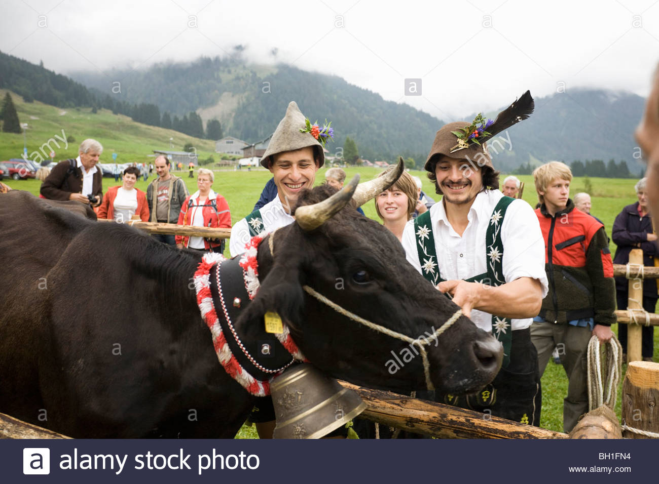 The herd of cattle from the Schwarzenberg Alp are being handed back to their owners, Cattle returing from the mountain - Stock Image