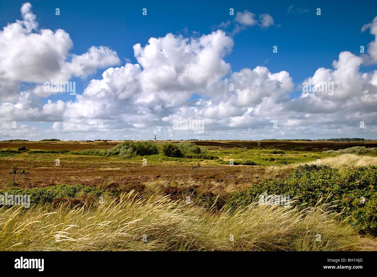 Braderup heath, Braderup, Sylt Island, Schleswig-Holstein, Germany - Stock Image