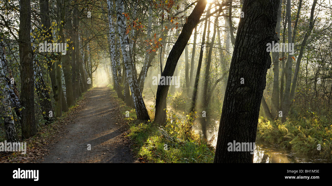 Alley between Lehde and Leipe, Spree Forest, Brandenburg (state), Germany - Stock Image